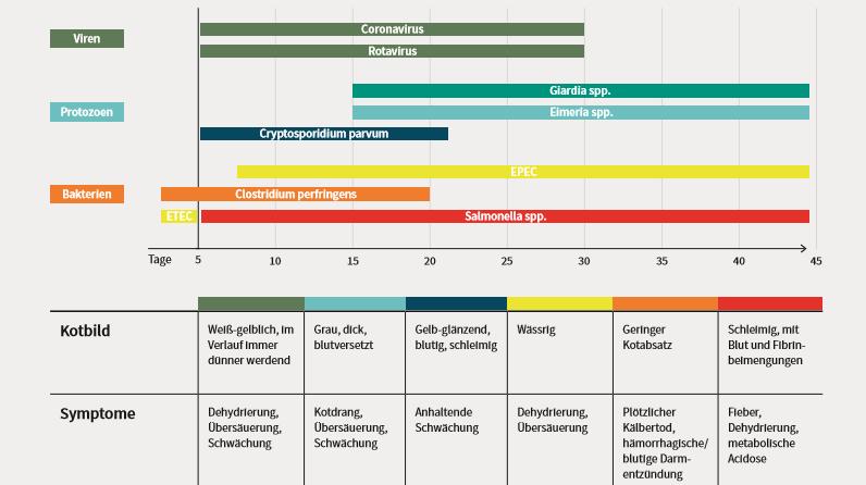 Übersichtstabelle über Kälbererkrankungen - darunter Viren, Protozoen & Bakterien sowie Symptome und Kotbild.