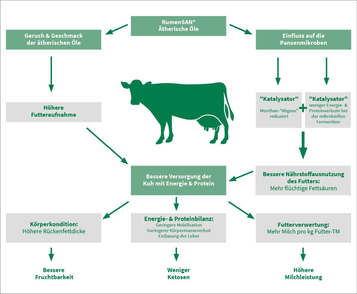 Grafik über die Wirkung des Sano-Wirkstoffs Rumensan