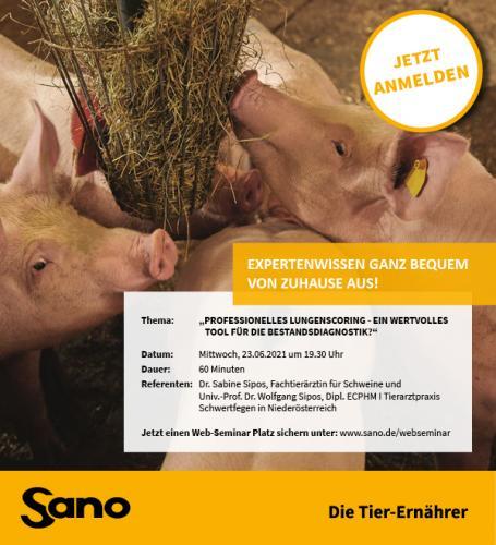 Mastschweine im Stall beim Fressen. Sano Bild.