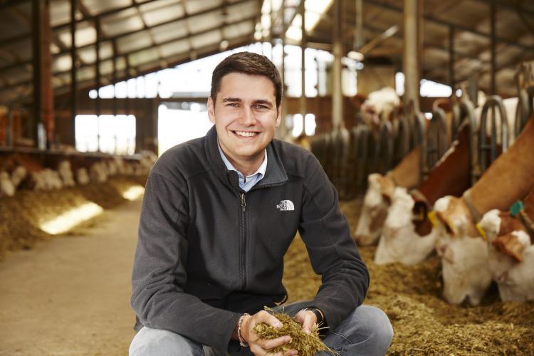 Berufseinsteiger greift hockend im Stall in das Futter am Futtertisch während ihm die Kühe dabei beobachten
