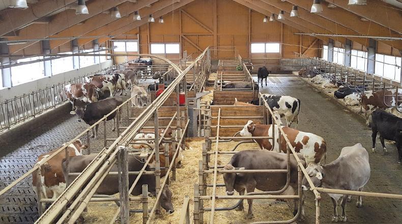 Man sieht einen modernen Stall mit Kühen von innen.