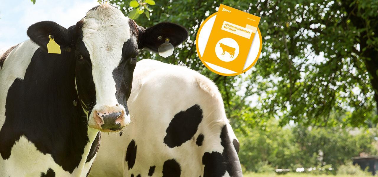 Fütterungskonzept Milchkuh Sano - Kühe auf Weide