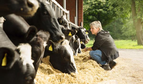 Landwirtin im Außenstall vor ihrem Jungvieh.
