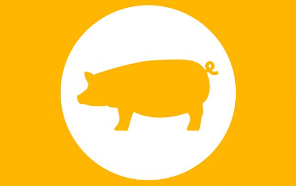 Fütterungskonzept Mastschweine Coverbild
