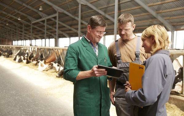 Drei Personen befinden sich im Kuhstall und schauen gemeinsam in ein Tablet.